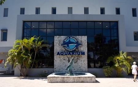 Mote Marine Laboratory And Aquarium, Sarasota