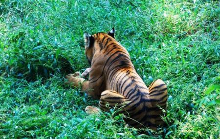 Assam State Zoo Cum Botanical Garden Image