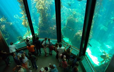 Monterey Bay Aquarium, Monterey