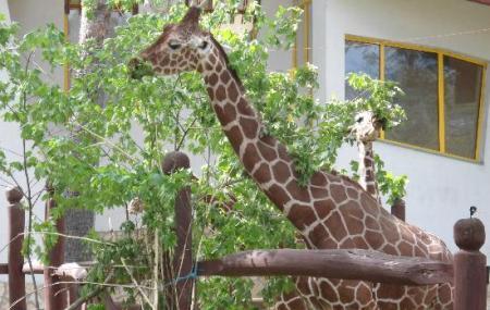 Debrecen Zoo And Amusement Park Image