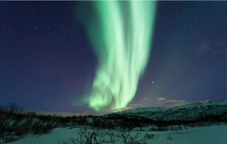 Arctic Explorers Tromso Image
