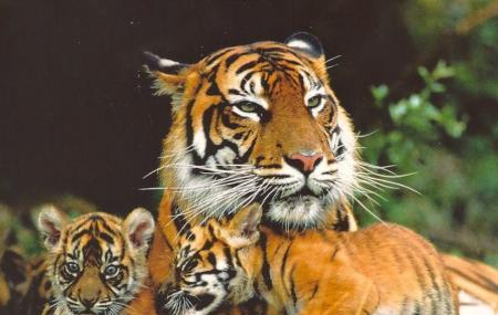Siberian Tiger Park, Harbin