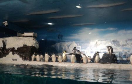 Ji Di Guan - Pole Aquarium, Dalian