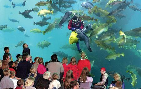 Alesund Aquarium, Alesund