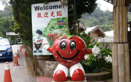Genting Strawberry Leisure Farm Image