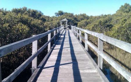Mangrove Boardwalk Image