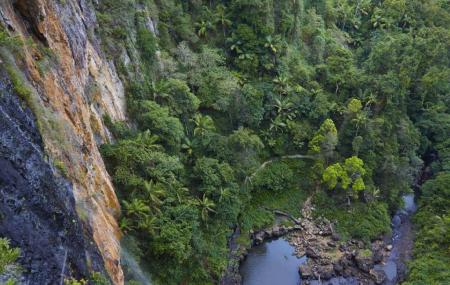 Springbrook National Park, Springbrook