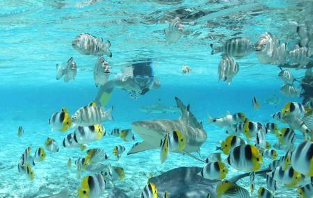 Bora Bora Lagoonarium Image