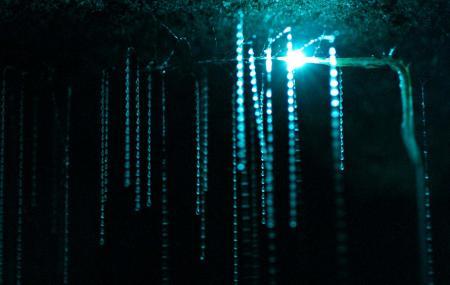 Waitomo Caves Image