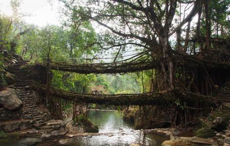 Double Decker Living Root Bridge, Cherrapunji