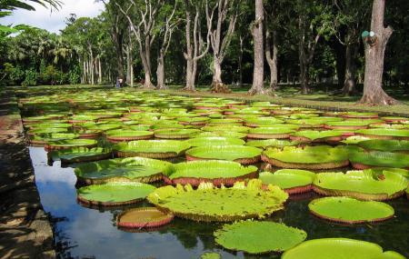 Pamplemousses Botanical Garden Image
