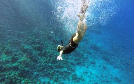 Maui Snorkel Charters, Kihei
