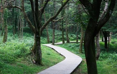 Jeolmul Natural Forest Image