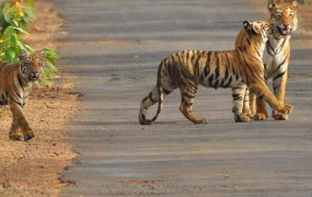 Satkosia Tiger Reserve, Bhubaneshwar