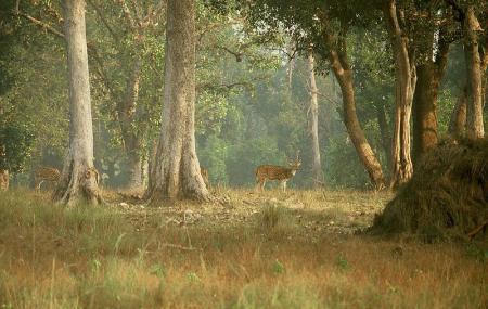 Kanha National Park, Kanha