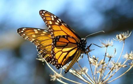 Monarch Butterfly Grove Image