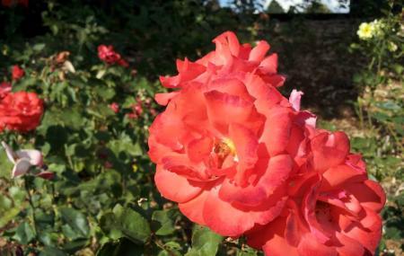 Peninsula Park And Rose Gardens, Portland