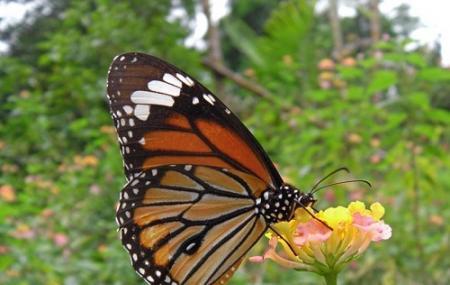 Kuang Si Falls Butterfly Park, Luang Prabang