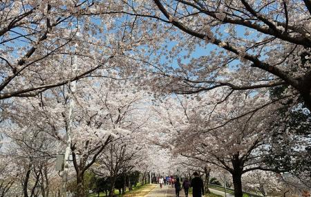 Samnak Ecological Park, Busan