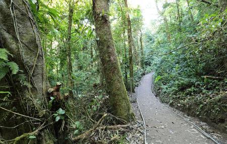 Monteverde Cloud Forest Reserve Image