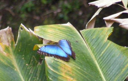 Monteverde Butterfly Garden, Monteverde