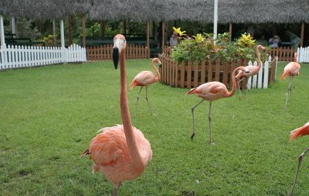 Ardastra Gardens, Zoo And Conservation Centre, Nassau