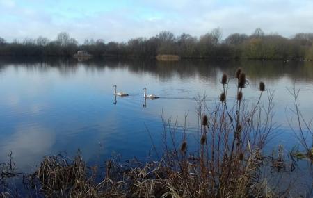 Stanwick Lakes Image