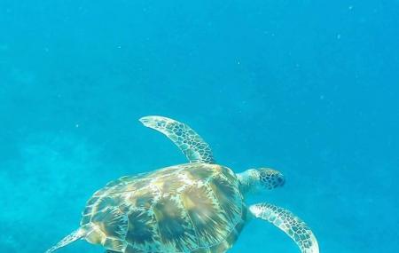 Gili Meno Turtle Sanctuary, Lombok