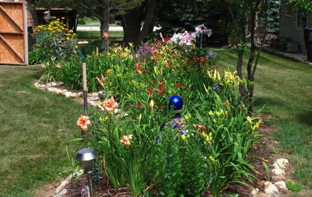 Ryder Country Daylilies, North Prairie