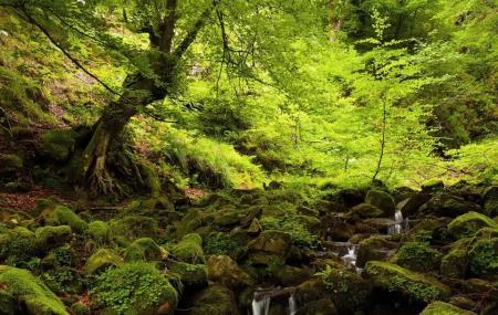 Sequoia Park Image