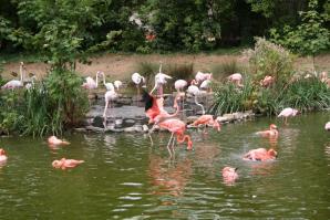 Parc De Zoologique, Lille
