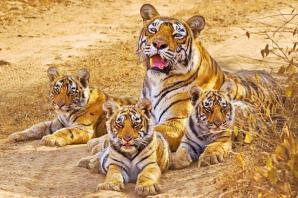 Sariska Tiger Reserve, Alwar