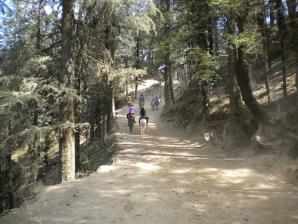 Mahasu Peak, Kufri