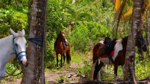 Discovery Horse Tours, Jaco