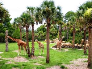 Jacksonville Zoo And Gardens, Jacksonville