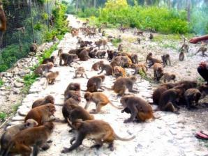 3 Monkeys Day Tours, Liberia
