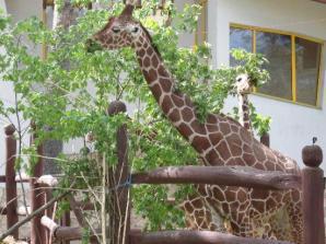 Debrecen Zoo And Amusement Park, Debrecen