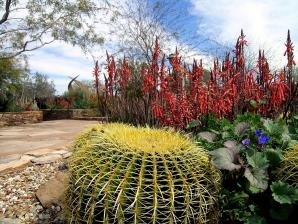 Desert Bontanical Garden, Phoenix