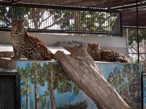 Limassol Zoo, Limassol