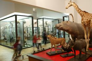 Museum Aquarium De Nancy, Nancy