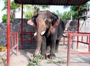 Hutsadin Elephant Foundation, Hua Hin