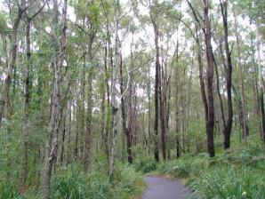 Coombabah Lakelands Conservation Area- Western Section, Coombabah
