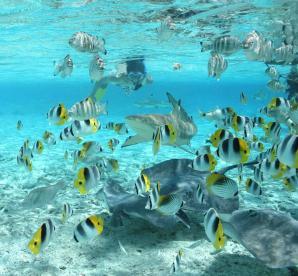 Bora Bora Lagoonarium, Bora Bora