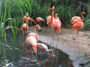 Zoo Of The City Of Barranquilla, Barranquilla