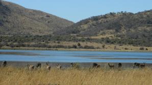 Mankwe Dam Region, Pilanesberg National Park