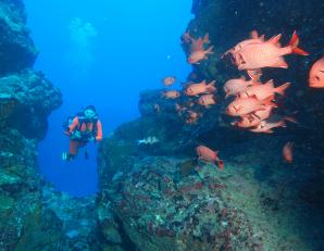 Ticabo Diving Centre, Flic En Flac