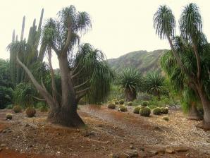 Koko Crater Botanical Garden, Honolulu