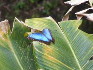 Monteverde Butterfly Garden , Monteverde