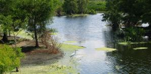 Green Cay Nature Center & Wetlands, Boynton Beach