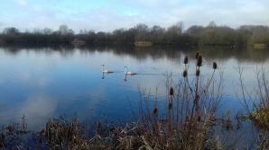 Stanwick Lakes , Northampton